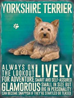 Yorkshire terrier Metalowy szyld tin sign 30x40 cm